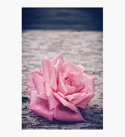 A simply Rose Photographic Print