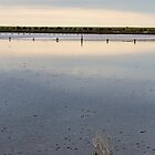 Lone Twig In Lake by Colin  Ewington