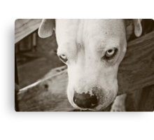 Won't You Come Play!? Canvas Print