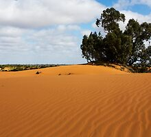 Dunes - Perry Sandhills by Colin  Ewington