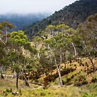 High Country Gums by WendyJC