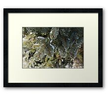 Mother Nature's Christmas Decorations - Pine Branches Framed Print