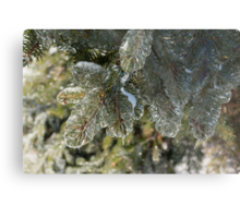 Mother Nature's Christmas Decorations - Pine Branches Metal Print