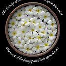 Frangipani flower blossoms by DAdeSimone