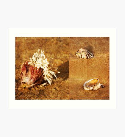 Natures Sculptures Art Print