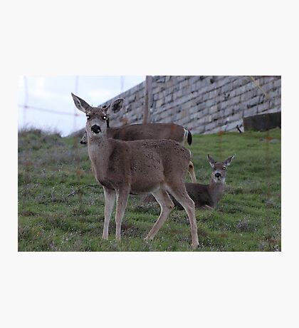 Precious Deer Photographic Print