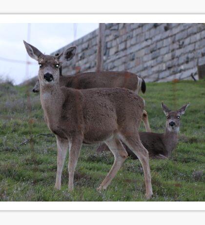 Precious Deer Sticker