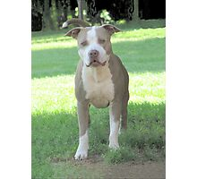 Buster ~ Photographic Print