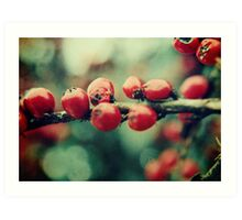 Red Winter Berries Art Print