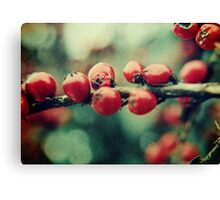 Red Winter Berries Canvas Print