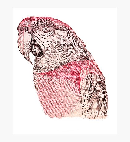 Red Macaw Photographic Print