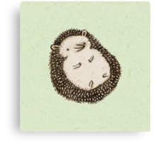 Plump Hedgehog Canvas Print