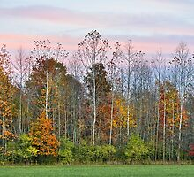 Autumn Wood at Sunset by Kenneth Keifer