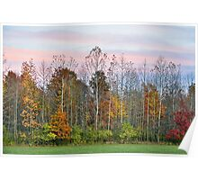 Autumn Wood at Sunset Poster
