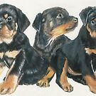 Rottweiler Puppies by BarbBarcikKeith