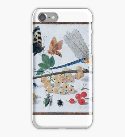 Jan van Kessel, senior () Drawings of insects -  iPhone Case/Skin