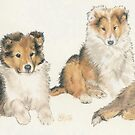 Shetland Sheepdog Puppies by BarbBarcikKeith