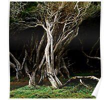 Cuta Rocks Tasmania Poster