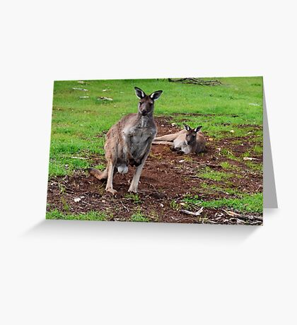 Kangaroos, Whats up Down Under Greeting Card