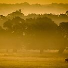Misty Sunrise by Martin Griffett
