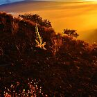 Sunset at 9300 Feet by Randy Richards