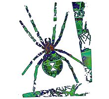 Arachnophilia-Green Photographic Print