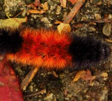 Woolly Bear Caterpillar Sticker