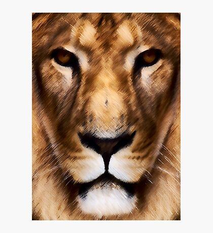 Animal King Photographic Print