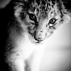 Lion Cub Portrait by Beth Wold