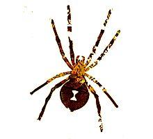 Arachnophilia-Dark Photographic Print