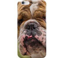 brindle bulldog iPhone Case/Skin