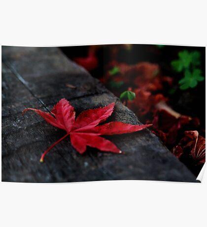 Red Leaf Fallen Poster