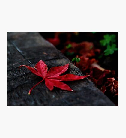 Red Leaf Fallen Photographic Print