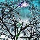 Winter Beech  by SexyEyes69