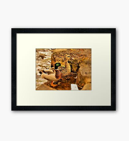 """Mimic""... prints and products Framed Print"
