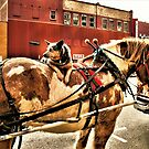 """""""Smart Dog: Lets the Horse Do All the Walkin'""""... prints and products by © Bob Hall"""