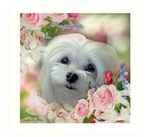 Snowdrop the Maltese - The Face that Melts my Heart Art Print