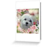 Snowdrop the Maltese - The Face that Melts my Heart Greeting Card