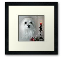 Snowdrop the Maltese - The Light in my Life ! Framed Print