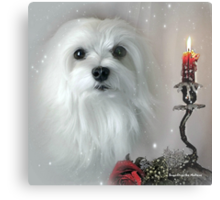 Snowdrop the Maltese - The Light in my Life ! Metal Print