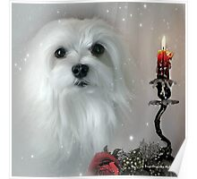 Snowdrop the Maltese - The Light in my Life ! Poster