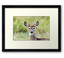 Portrait of a Whitetail Deer Framed Print