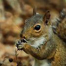 Nut Connoisseur by Karen Peron