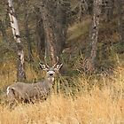 Mule Deer Buck 2 by Tracy Friesen