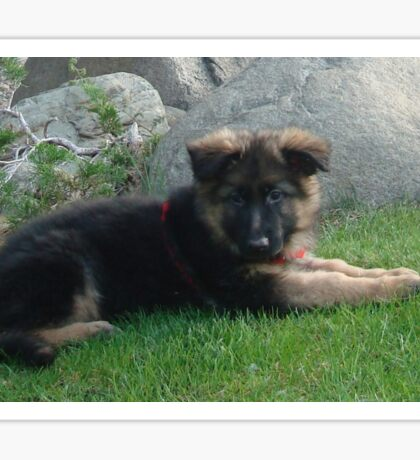 GS black tan puppy laying in grass Sticker