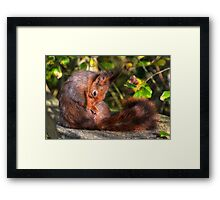 Wash and brush up............. Framed Print