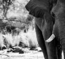 Elephant II Sticker