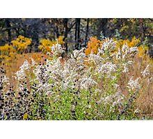 Nature's Bouquet Photographic Print