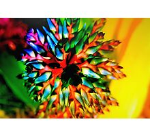 Bromeliad color wheel Photographic Print