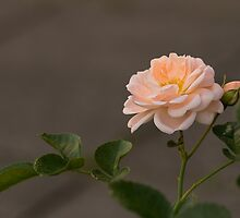 Magical Roses. by Irina777